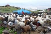 Wyprawy na Ararat