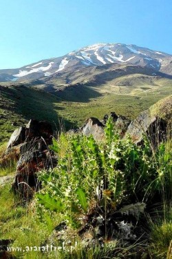 Mount_Damavand_2015 (6)